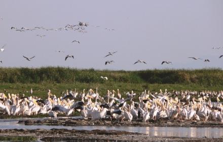 Sulle Orme degli Animali Serengeti -