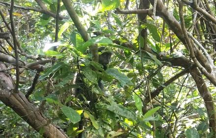 foresta di jozani zanzibarviaggi 2 -
