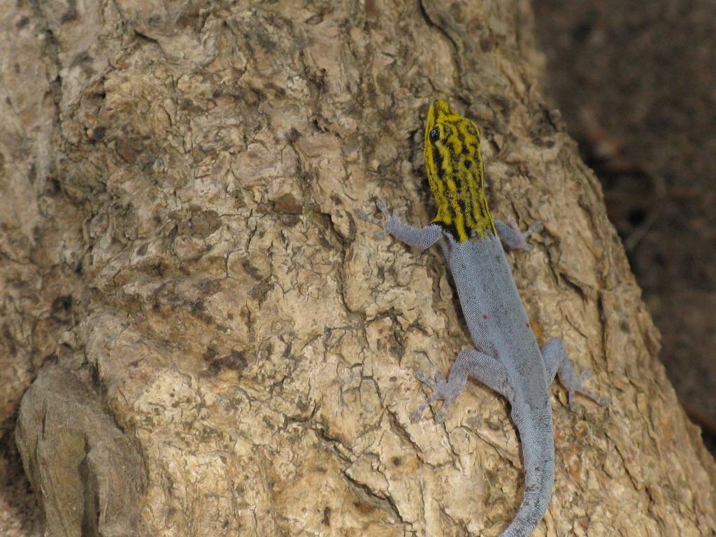 Lucertola mimetica Zanzibarviaggi Parco Jozani -